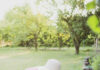 Urządzamy ogród na wiosnę