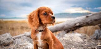 Czy rodzaj karmy ma duże znaczenie dla psów