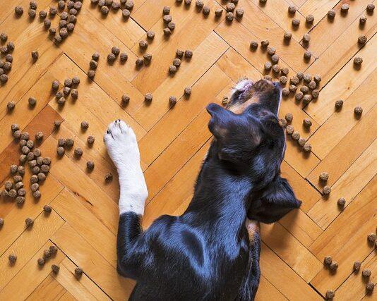 Karma dla psa Royal Canin