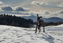 Dlaczego pies potrzebuje suplementacji