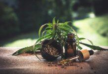 Zastosowanie oleju z konopi