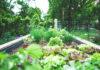 Dom z ogrodem